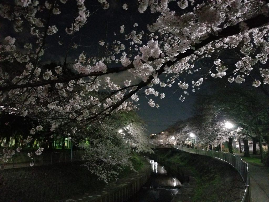 南阿佐ヶ谷から徒歩10分の桜