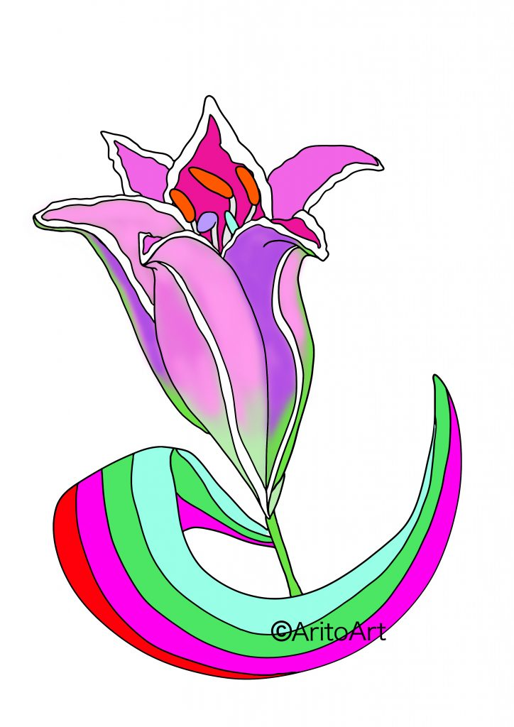 Flowering of Pink Lily