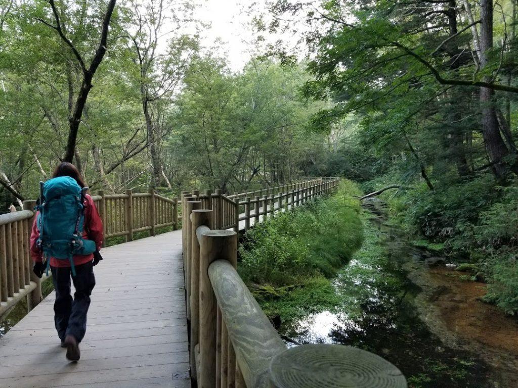 大正池へ向かう道