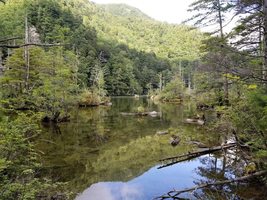 浅く透明度の高い池 少し奥に行くとこのような風景 明神池