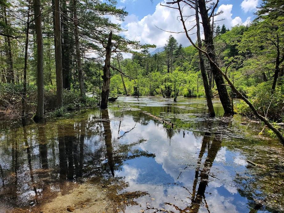 また湿地帯