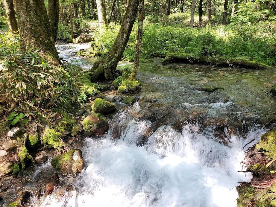 このような小さな滝の流れがちょいちょいと観れます